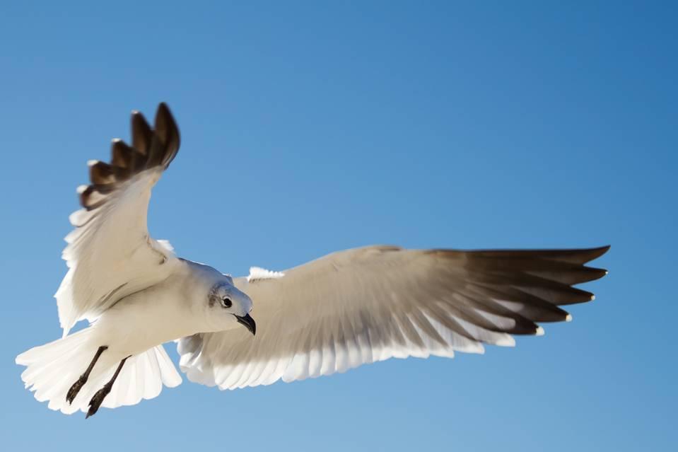 bird-flight